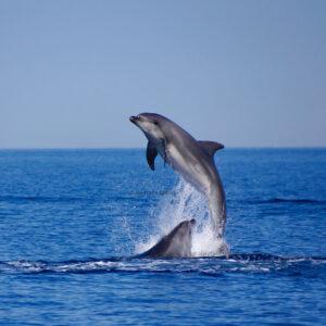 digital detox mare sardegna delfini